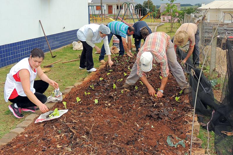 Equipe realizou o plantio de mudas na horta escolar. (Foto: Juciara Gregory / Divulgação)